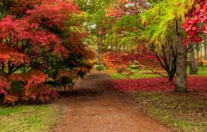 Национальный питомник хвойных пород деревьев Беджбери, Кен
